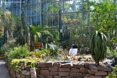 Colección de Cactáceas en el invernadero
