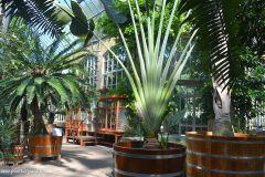 Invernadero-Greenhouse