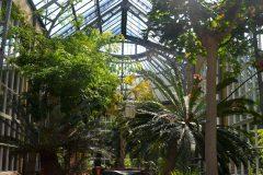 Invernadero con palmeras y especies de clima tropical