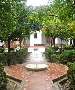 tipico patio de estilo mudejar con la fuente en el centro
