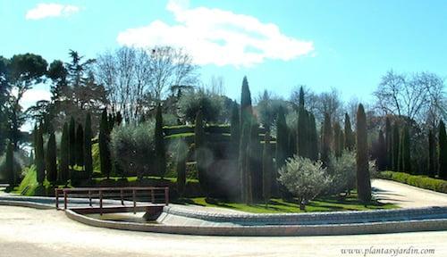 Cupressus sempervirens & Oleas europeas en el Jardin del Buen Retiro Madrid