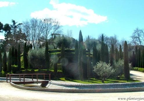 Cupressus sempervirens & Olivos en el Jardin del Buen Retiro Madrid copia
