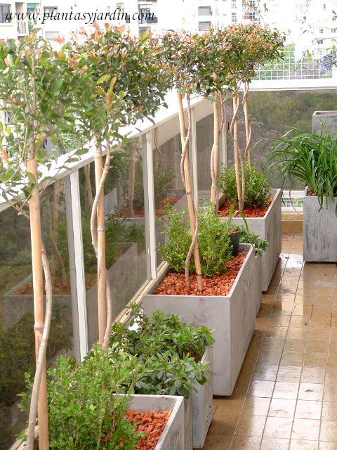 Rboles nativos de argentina y sudam rica plantas jard n - Arbolitos para jardin ...