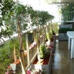 Eugenias en arte topiario con Azaleas dobles y Buxus