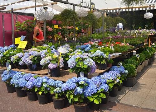 Los peligrosos porros de hortensia taringa for Plantas para jardin