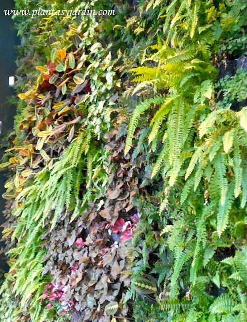 Jardin vertical en BCN San Pere y Pau Claris