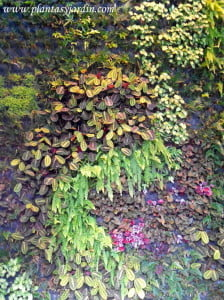 Jardin vertical en BCN en Urquinaona
