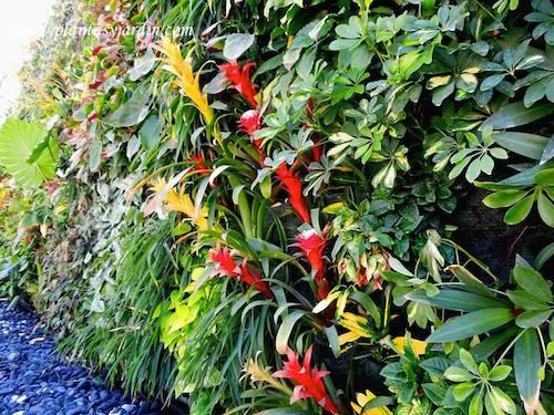 Jardin vertical en Ibiza con Bromelias