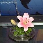 Lilium rosado con follaje de Pittosporum y Sauce