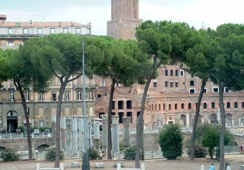 Pinus pinea en la ciudad de Roma