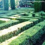 laberinto de Buxus recortados en los Jardines de Sabatini Madrid