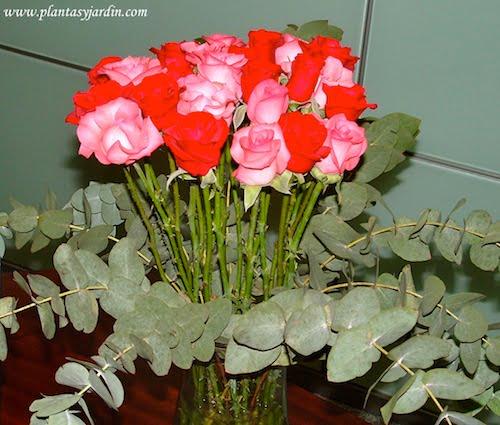 Arreglo floral de Rosas rosas y rojas con follaje de Eucalypto cinerea