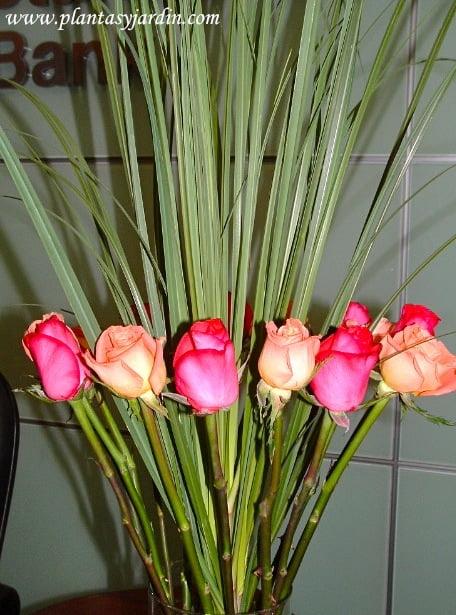 Arreglo floral de rosas fucsias y naranjas