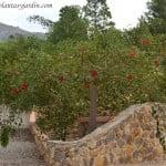 Erythrina crista galli Ceibo en verano