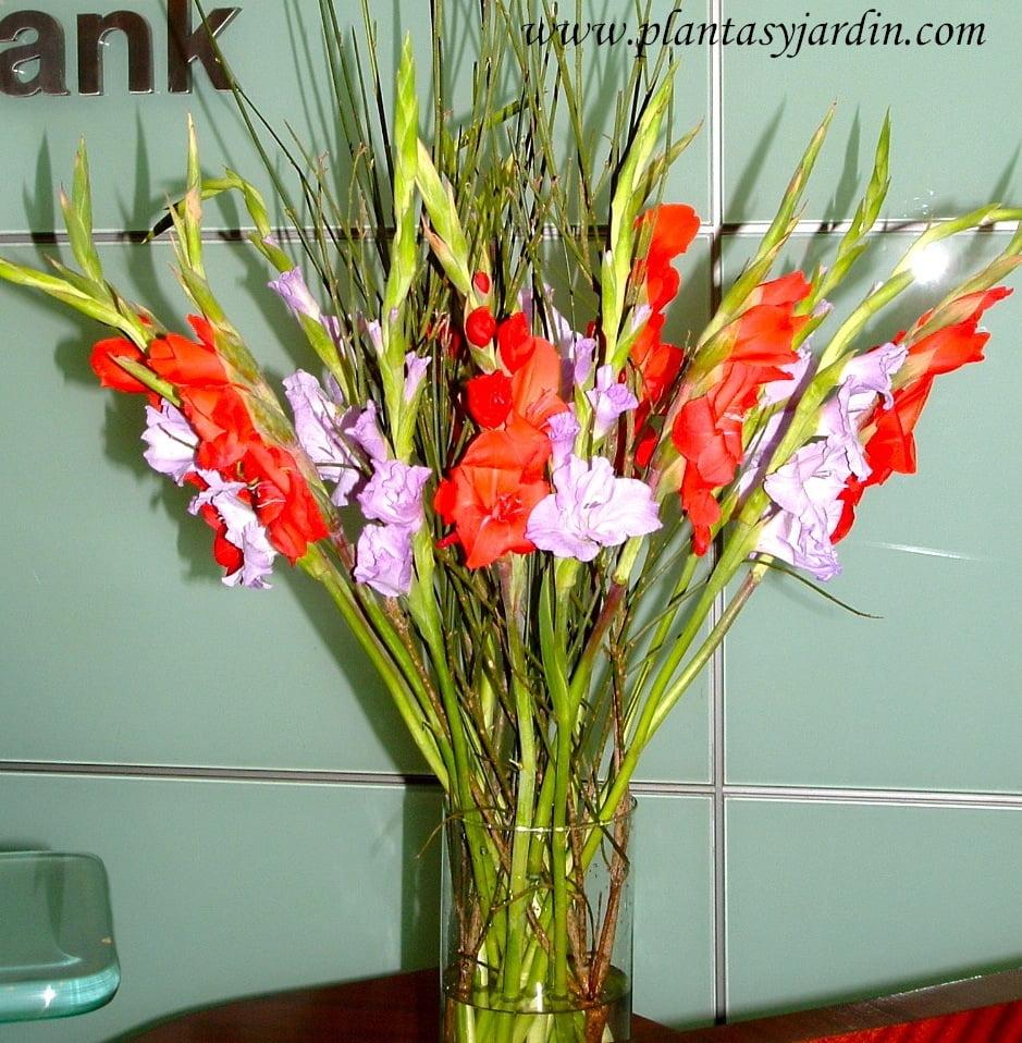 Gladiolos rojos y lilas como flor de corte en un bouquet floral con Retama