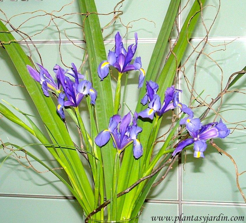 Iris bouquet floral, flor & follaje, con Sauce eléctrico