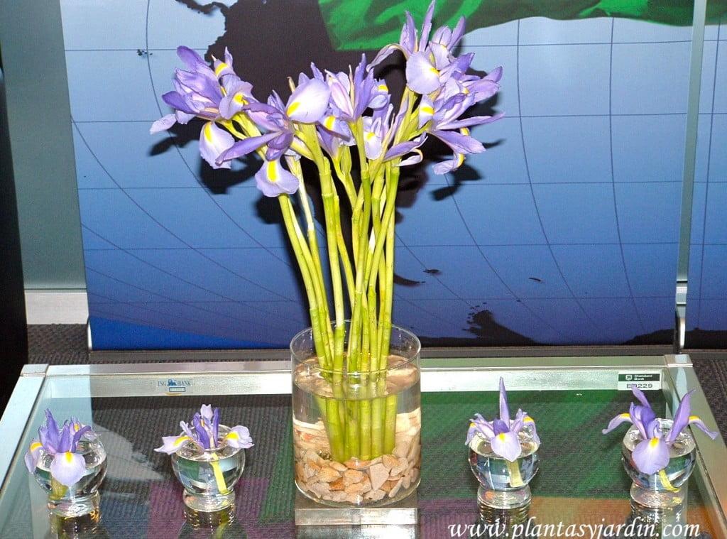Iris en bouquet floral