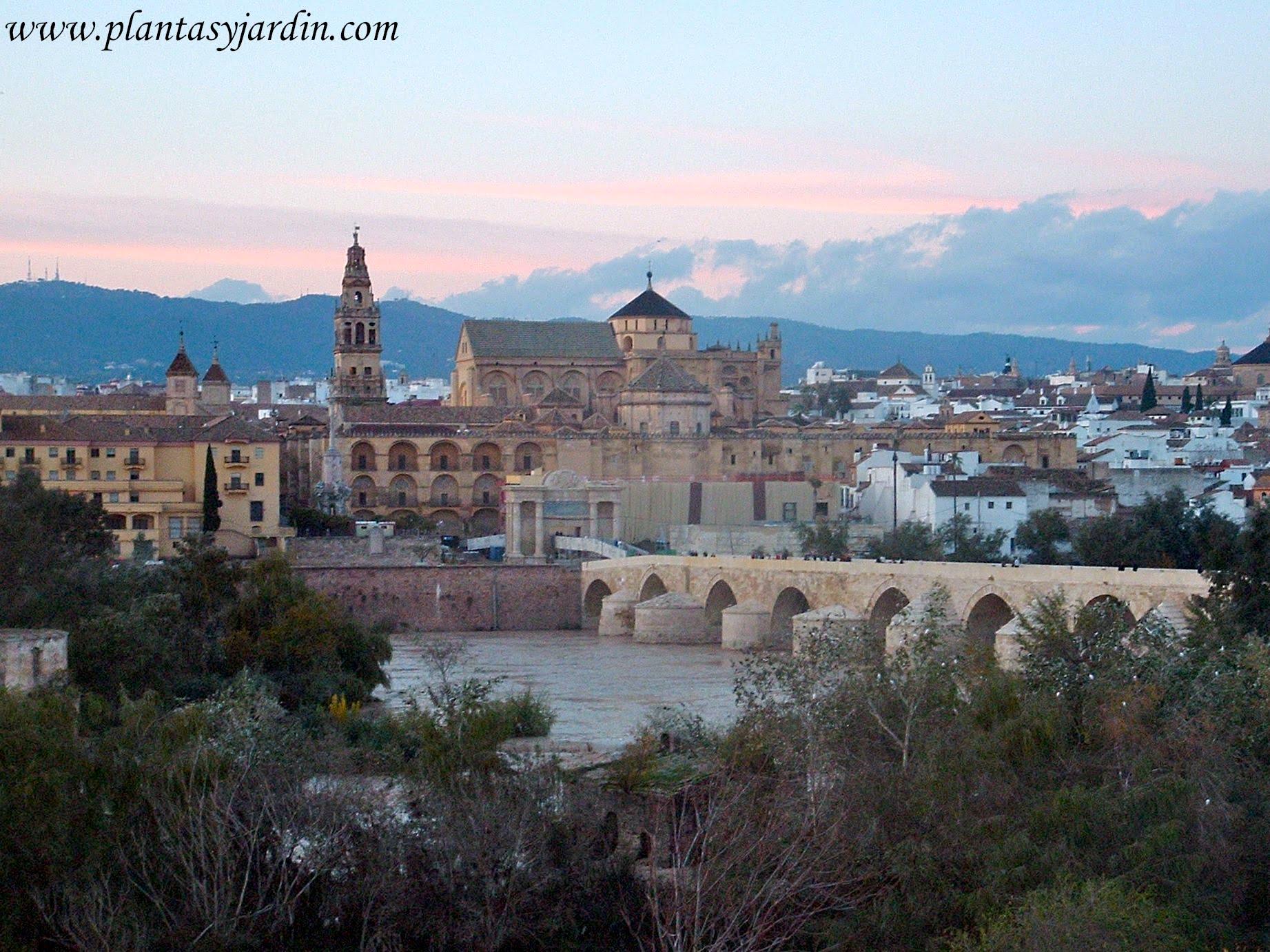 La Mezquita de Cordoba a orillas del rio Guadalquivir