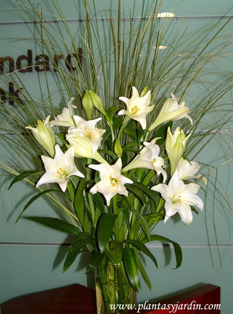 Lilium candidum perfumados en bouquet floral con Cortaderas