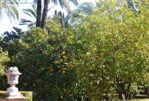 Limonero y Naranjo con frutos en invierno en los Jardines del Real Alcazar Sevilla
