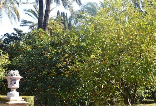 citrus limon, el limonero | plantas & jardín