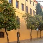 Naranjos como arbolitos urbanos en Córdoba Andalucía