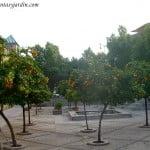 Naranjos en un plaza en Córdoba