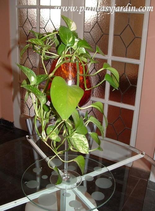 Potus en copon de cristal de Murano