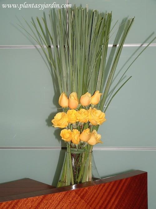 Rosas amarillas en diferentes lineas con Cortaderas cortadas