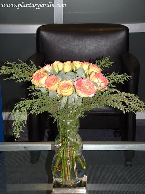 Rosas bicolor en bouquet floral