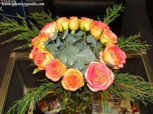 Rosas bicolores visto desde arriba