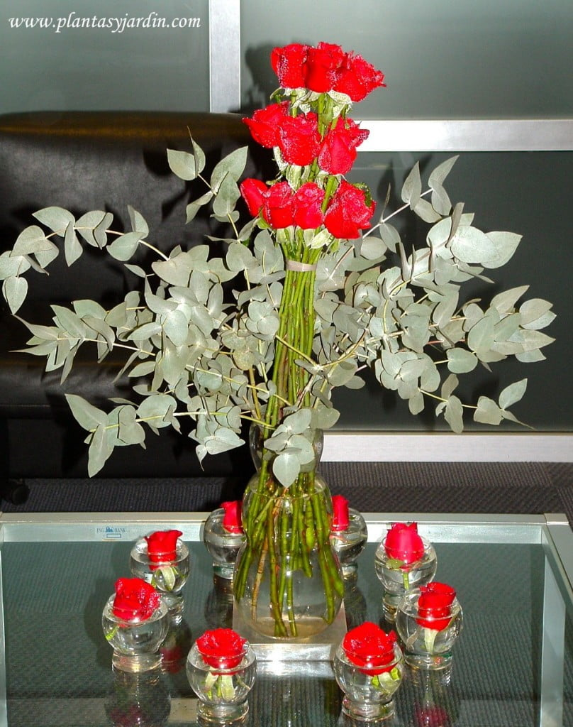 Rosas con Eucalypto cinerea