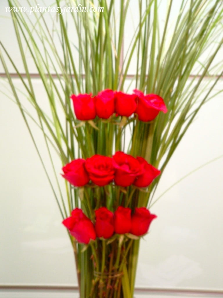 Rosas rojas con Cortaderas