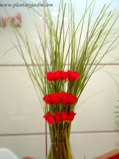 Rosas rojas con follaje de Cortadera natural