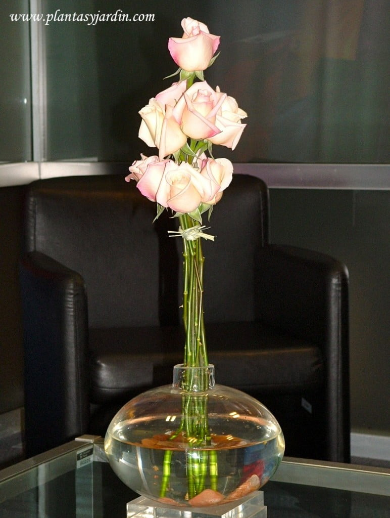 Rosas rosas con piedras en la base