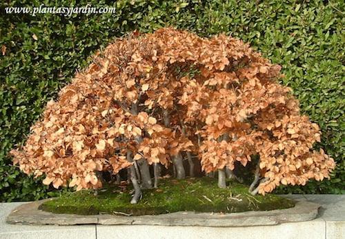 el arte del bonsai