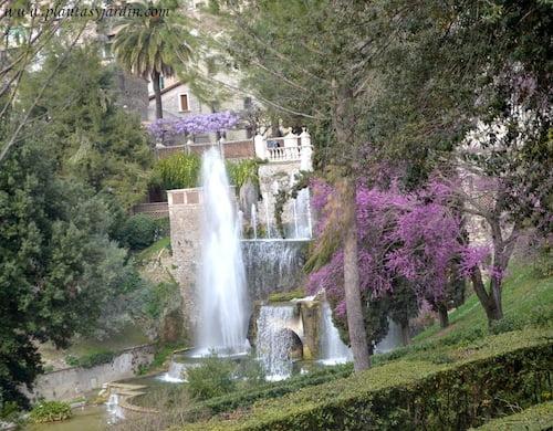 vista de los estanques y Fuente de Neptuno con los colores primaverales del Cercis siliquastrum y Wisteria sinensis en Villa dEste