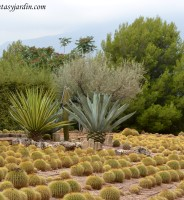 Cuáles son los requerimientos del suelo para plantar cactus