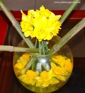 Narcissus con cañas en bouquet floral.