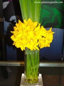 Narcissus con follaje de Iris, en bouquet floral.