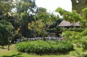 macizo de Agapantos florecidos en verano en el Parque del Laberinto de Horta