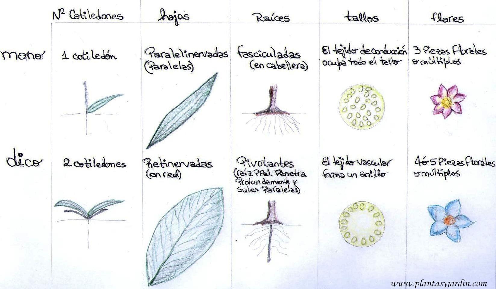 La Morfología De La Hoja Plantas Y Jardín
