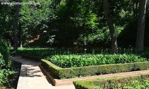 parterre de Agapantos, Parque del Laberinto de Horta