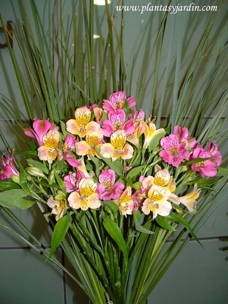 Alstroemerias rosas y amarillas, como flor de corte en un bouquet floral con Cortaderas