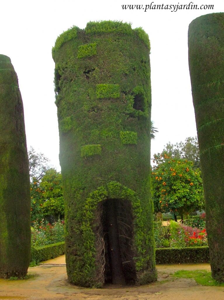 Arte topiario-Cupressus sempervirens en los Reales Jardines del Alcázar de los Reyes Católicos en Córdoba.