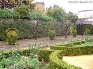 Arte topiario en los Jardines Reales del Alcázar de los Reyes Católicos en Córdoba-Andalucía