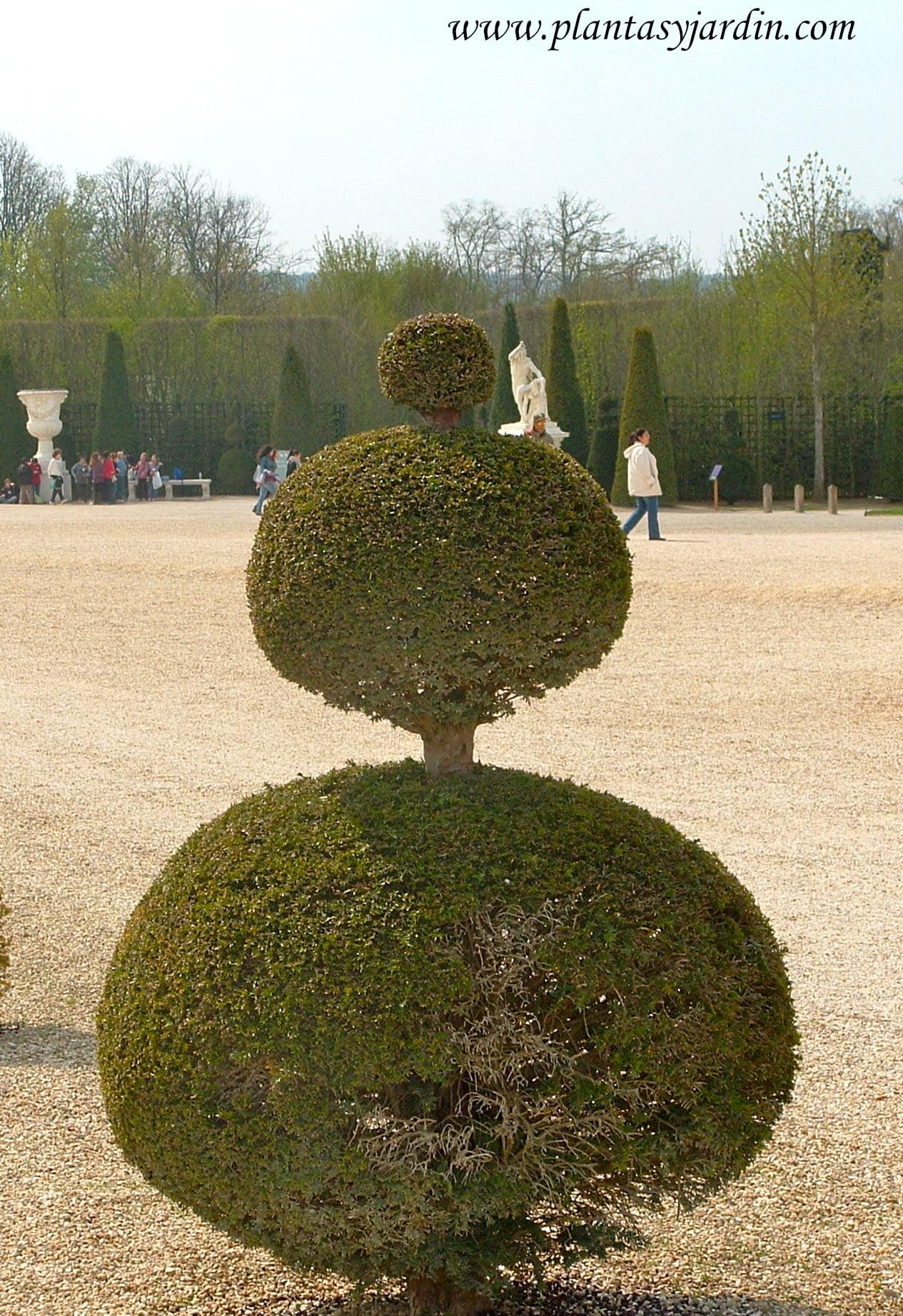 arte topiario plantas jard n