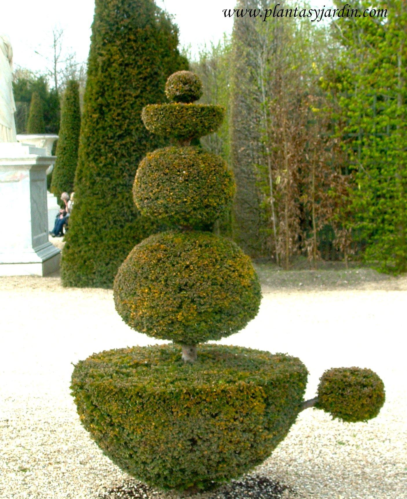 figuras geométricas en arte topiario en los Jardines de Versalles.