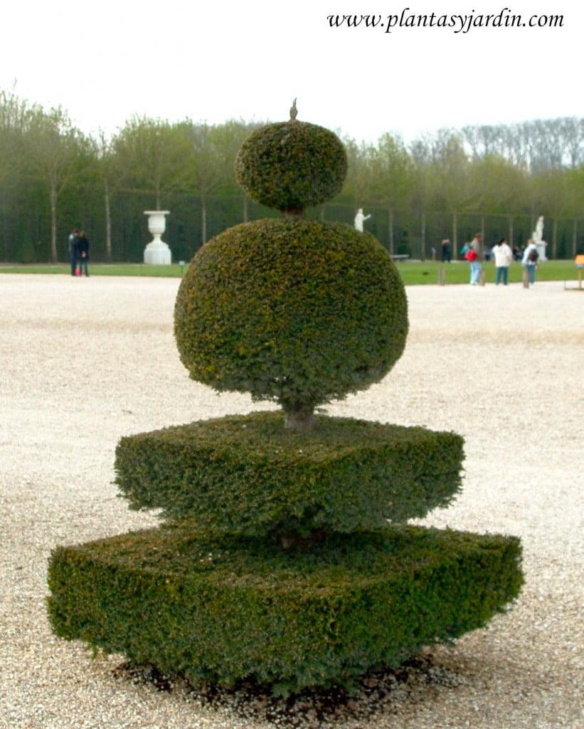 Arte topiario en los jardines de Versalles.