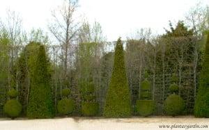 Arte topiario, figuras geométricas, en los jardines de Versalles.